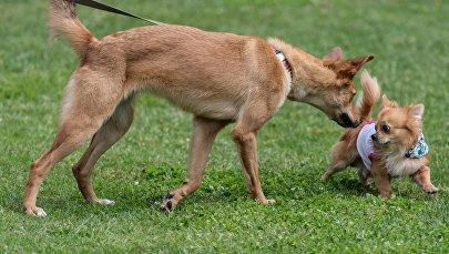 Собаки в парке. Архивное фото