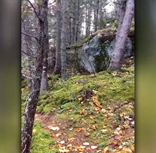 Жуткое дыхание земли ошарашило пользователей соцсетей. Видео из Канады