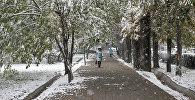 Первый снег в Бишкеке. Архивное фото