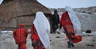 Памирлик кандаштар Кыргызстанда калабы. Кайчы пикирлер