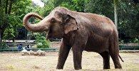 Слоненок в зоопарке. Архивное фото