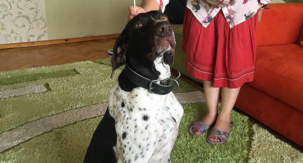 Собака по кличке Спайсик, по убийству которого идет суд в Бишкеке. Архивное фото