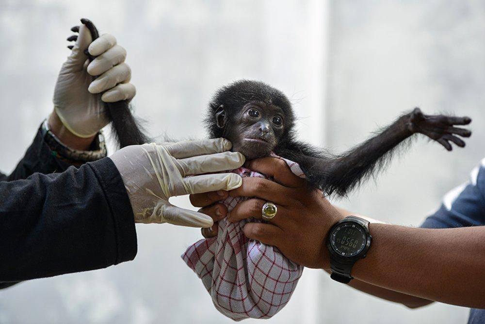Зоопарк города Банда-Ачех (Индонезия)