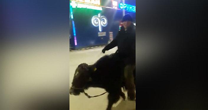 Мужчину верхом на яке сняли на видео возле Панорамы