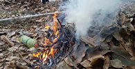 Почему опасно сжигать листву — факты, которые вы могли не знать. Видео