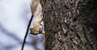 Белка на дереве. Архивное фото