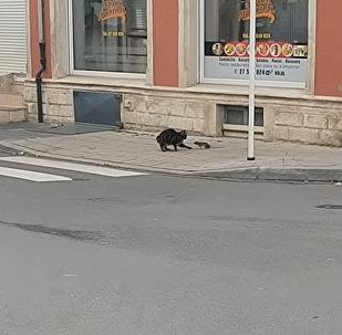 Кот охотился на крысу, но потом что-то пошло не так, — смешное видео