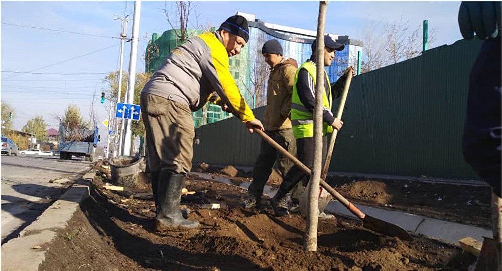 Посадка деревьев вдоль улицы Шопокова от улицы Фрунзе до Жибек Жолу