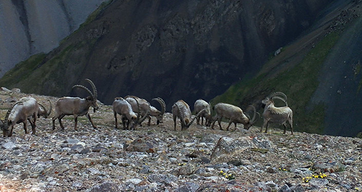 Дикие животные на фотоловушках, установленных на Иссык-Куле