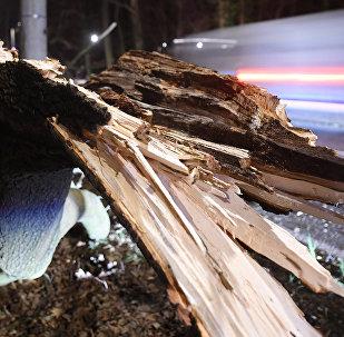 Автомобиль проезжал мимо упавшего дерева. Архивное фото