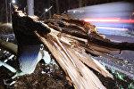 Автомобиль проезжал мимо упавшего дерева рядом с дорогой около Лейпцига, в восточной Германии. 19 января 2018 года