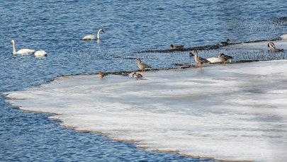 Птицы на озере. Архивное фото