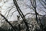 Ветви дерева, увешанные сосульками. Архивное фото