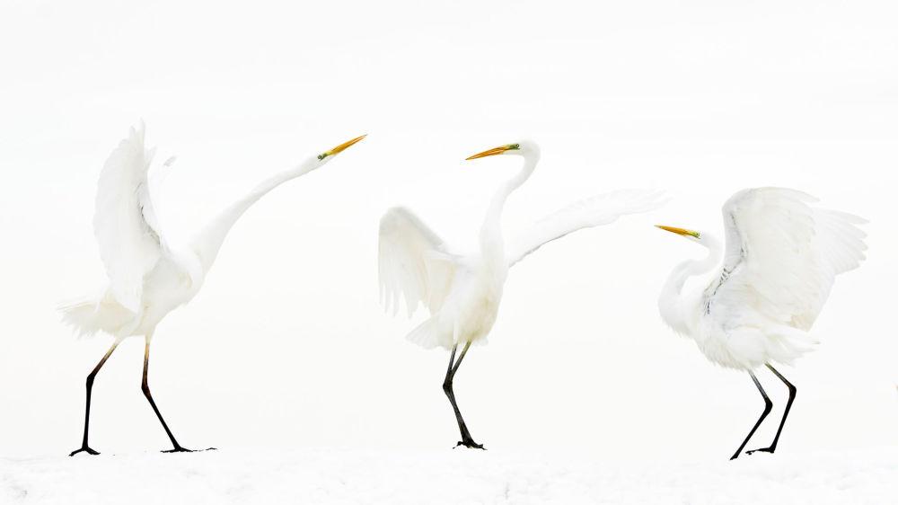 Победитель в категории Птицы — Бенсе Мате из Венгрии, представивший фото Место встречи