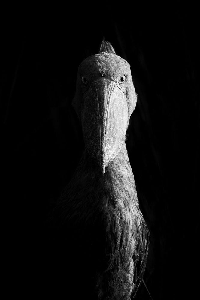 Лучшее фото в категории Черно-белое сделал американец Двир Баркай