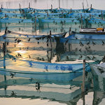 Ферма по разведению крабов на озере Хунцзэху в Китае