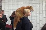 Как воротник — девушку с лисой на плечах сняли на видео в московском метро