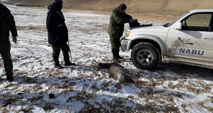 За незаконный отстрел косули задержан браконьер