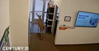 Женщина покинула рабочее место за миг до того, как олень разнес его. Видео