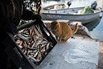 Кот у корзины с рыбой. Архивное фото