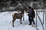 Переселение 9 голов марала из Нарынского государственного заповедника в лесной заказник Балтыркан Аксыйского района