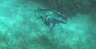 Акула укусила дайвера за голову — момент нападения попал на видео