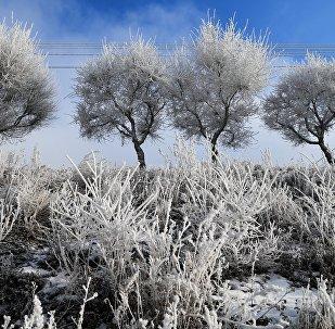 Деревья в инее. Архивное фото