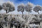 Сильные морозы в Красноярском крае