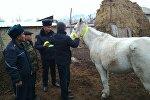 В нескольких селах Ак-Сууйского района Иссык-Кульской области автоинспекторы начали привязывать светоотражающие ленты к хвостам лошадей и на уздечки