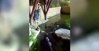 Американец упал с тарзанки в водоем, кишащий крокодилами. Видео