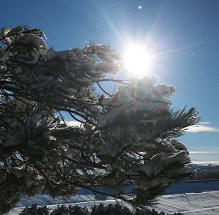 Снег на деревьях в лесу. Архивное фото