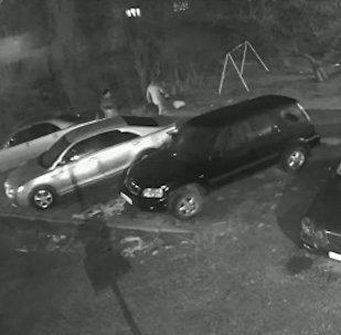 Попили и разбросали бутылки на детской площадке в Бишкеке — возмутительное видео