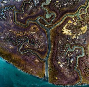 Красочные травы в одном из венецианских каналов на одном из островов Венеции, Италия