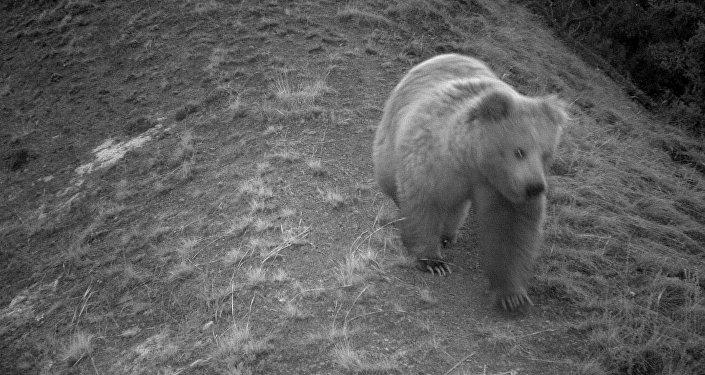 Фотоловушки в природном парке Хан Тенири и заповеднике Иссык-Куль