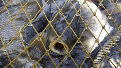 Рыбы. Архивное фото