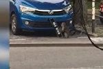 Наглая обезьяна украла номера с машины — забавное видео из Малайзии