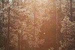 Деревья в солнечном свете. Архивное фото