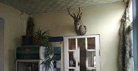 В гостинице Оша, где при пожаре погибли две девушки, найдены шкуры волка и снежного барса, а также голова оленя