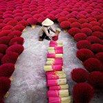 Вьетнамда жыттуу таякчаларды өндүргөн ишкананын жумушчусу даяр продукцияны чогултууда