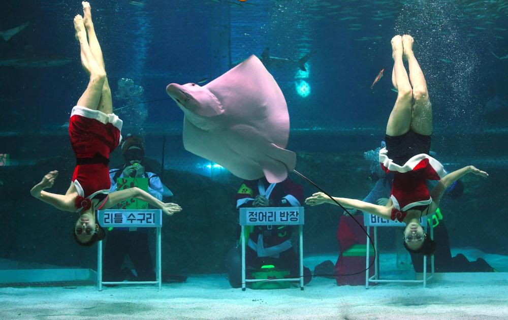 В Южной Корее снегурочки дайверы устроили шоу в аквариуме