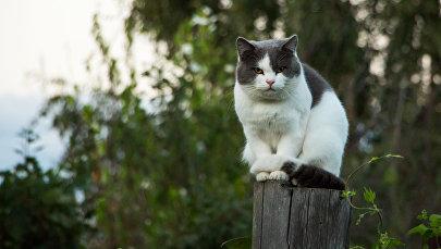 Кот. Архивное фото