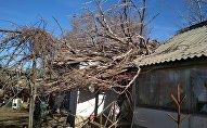 Дерево упавшее на крышу дома из-за сильного ветра дерево в Токмоке