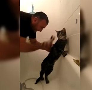 Послушный мусульманский кот из Чечни покоряет соцсети — видео