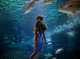 Океанариум AquaRio в Рио-де-Жанейро