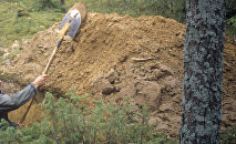 Мужчина с лопатой копает землю. Архивное фото