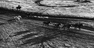 Перегон лошадей. Архивное фото