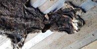 11 тонн ослиных шкур, которые пытались незаконно перевести из Кыргызстана в Китай на таможне Нарын на автомашине марки МАN.