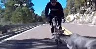 Олень прыгнул на ехавшего велосипедиста, едва не убив его. Видео