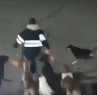 В Мексике 11 собак убили женщину — погоня попала на видео