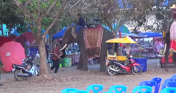 Разъяренный слон жестко проучил девушку за попытку сделать селфи. Видео